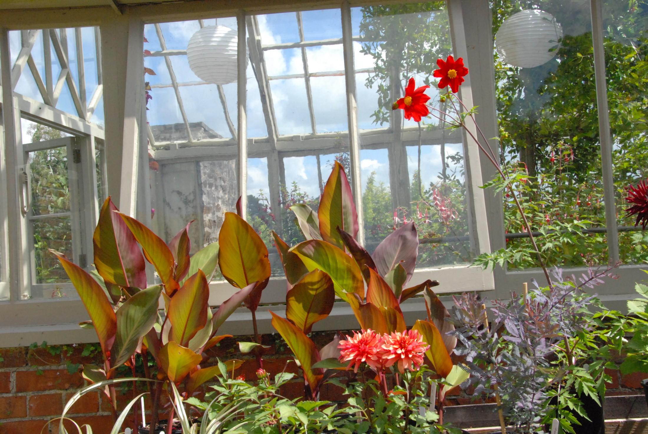 Resa England: Cornwalls trädgårdar sept 2011        -AVSLUTAD