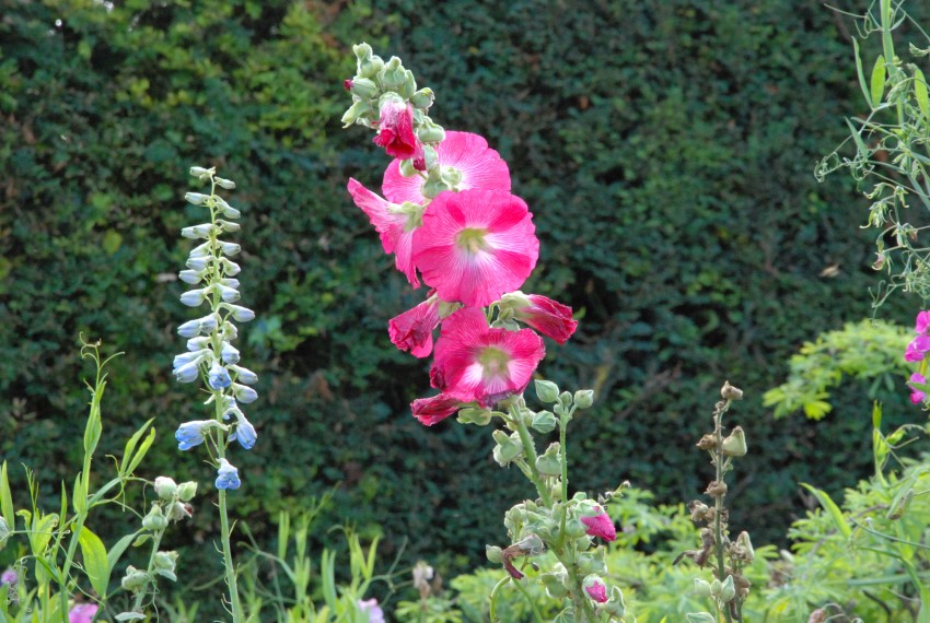 Blogg: Bilder från resan till Cornwall och Somersets trädgårdar, sept 2011